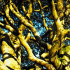 Thumbnail image for An Exmoor stroll celebrating trees