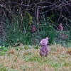 Thumbnail image for A circular walk in Exmoor starting at Tarr Steps