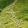 Thumbnail image for Wales Coast Path:Mynydd y Gwyddel to Porth Colmon