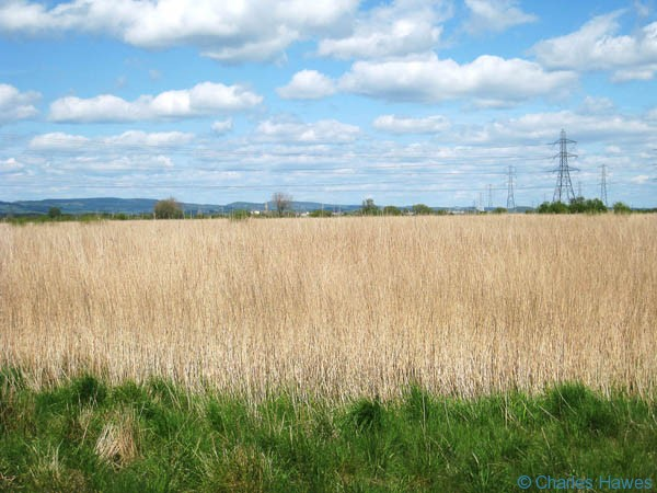 Reed beds of the Newport Wetlands Nature Reserve taken from the Wales Coast path. Photograph by Charles Hawes. Walking in Wales.