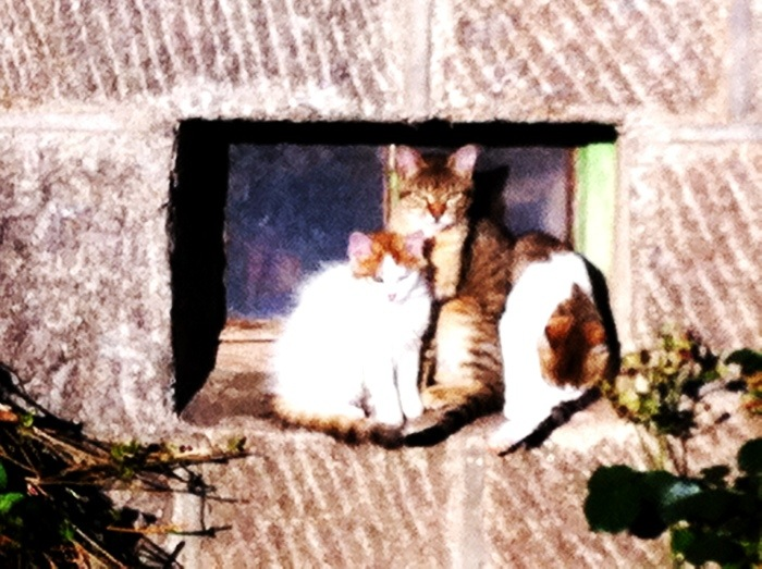cats sunning themselves on the Way of St James, France, photographed by Charles Hawes. Route St Jacques. GR65