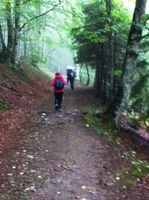 Walkers in the woods on The Way of St James between Chel D'Aubrac and St. Come d'Olt photographed by Charles Hawes. Route St jacques. GR65