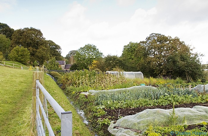 Vegetable garden at Delacorse photographed from the Wales Coast Path between St Clears and Amroth by Charles Hawes. Walking in Wales.