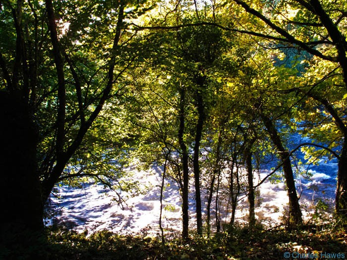 River Barle glimpsed through the trees of Ashway Hat Wood, Exmoor, photographed by Charles Hawes