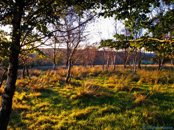 Small wood of mostly birch at sunset near Tarr Steps, Exmoor, Somerset, photographed by Charles Hawes