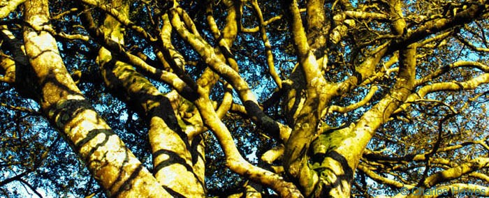 Post image for An Exmoor stroll celebrating trees