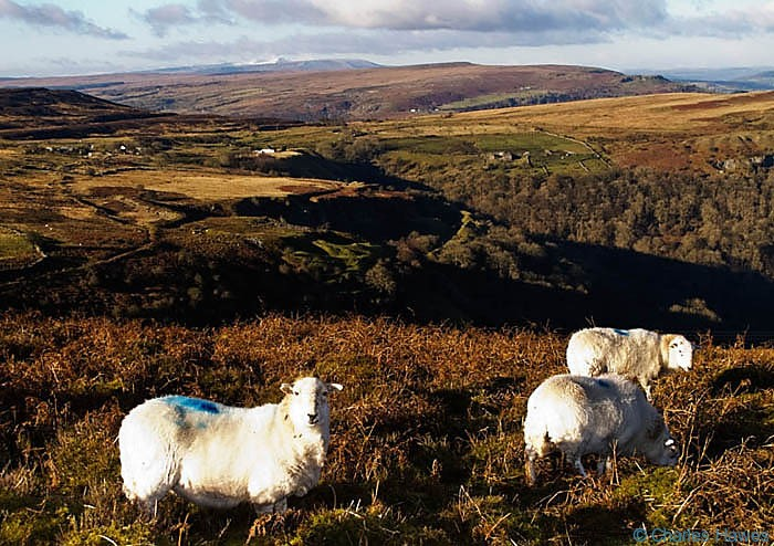 Sheep on the side of Blorenge and view over the Brecon Beacons photographed by Charles Hawes. Walking in Wales.