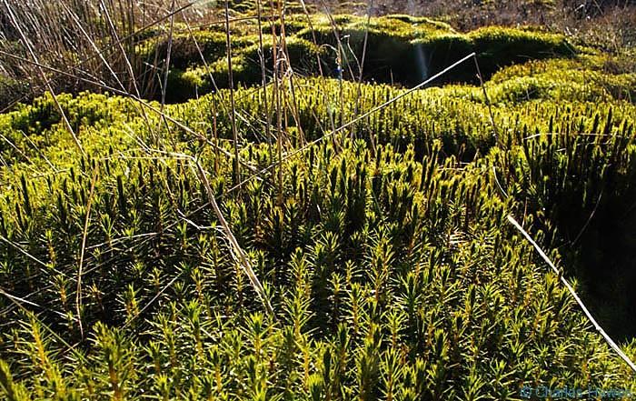 Vegetation on Blorenge, photographed by Charles Hawes. Walking in Wales.