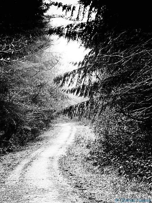 Fedw wood, near Devauden, Monmouthshire, Wales, Photographed by Charles Hawes