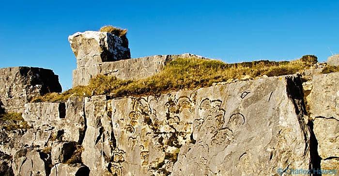 Lichen on Limestone rocks on MynyddLlangatwg, Powys, photographed by Charles Hawes