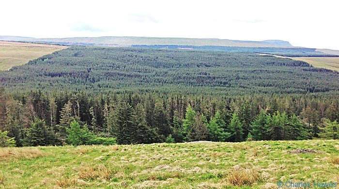View over Cam Woodland from The Dales Way, photographed by Charles Hawes
