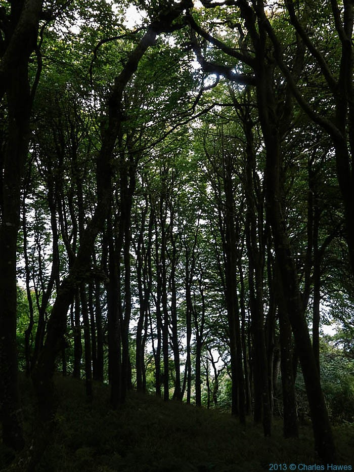Woods near Borough Head, Pembrokeshire, photographed from The Wales Coast Path by Charles Hawes