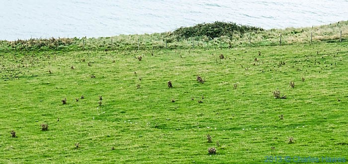 Fungi Fairy Ring photographed from The Wales Coast Path in Ceredigion by Charles Hawes