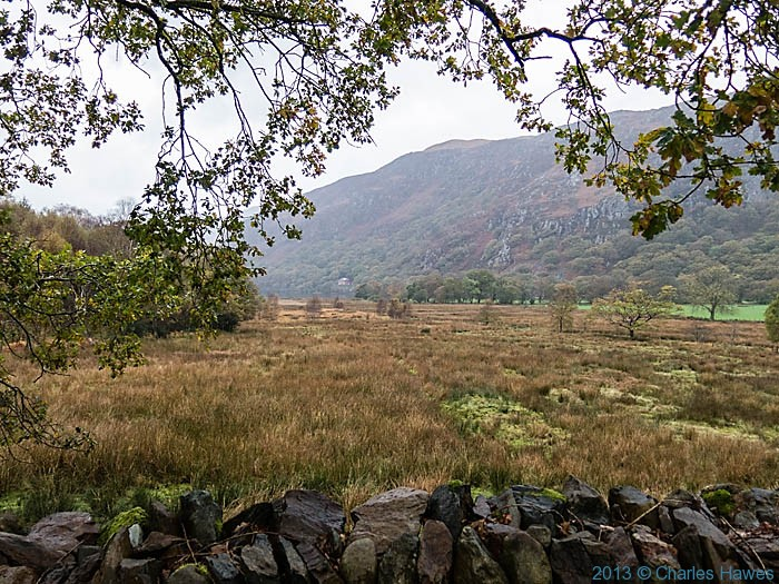 Marsh near Llyn Dinas, outside Beddgelert, Snowdonia, photographed by Charles Hawes