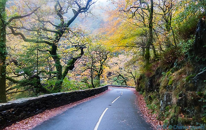Woods by the A4085 near Pont Aberglaslyn, near Beddgelert, photographed by Charles Hawes