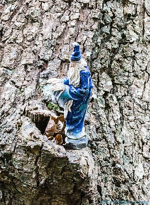 Wizard stuck into a tree in the Llyfnant Valley, photogrpahed from The wales Coast path in Ceredgion by Charles Hawes