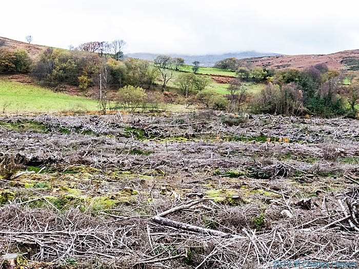 Debris from tree felling photographed from The Wales Coast Path near Pennal by Charles Hawes