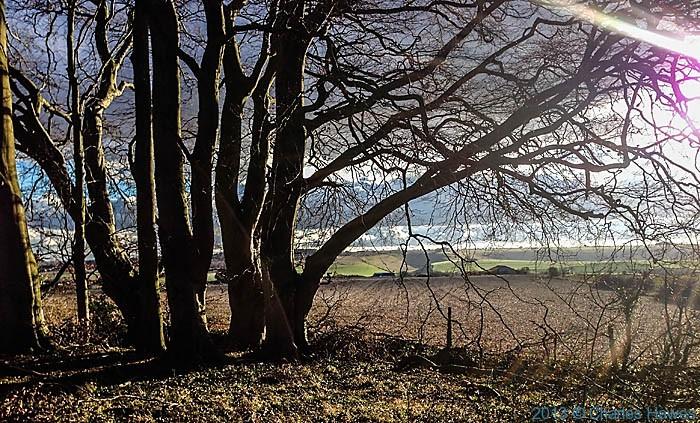 Grovely wood walk-38