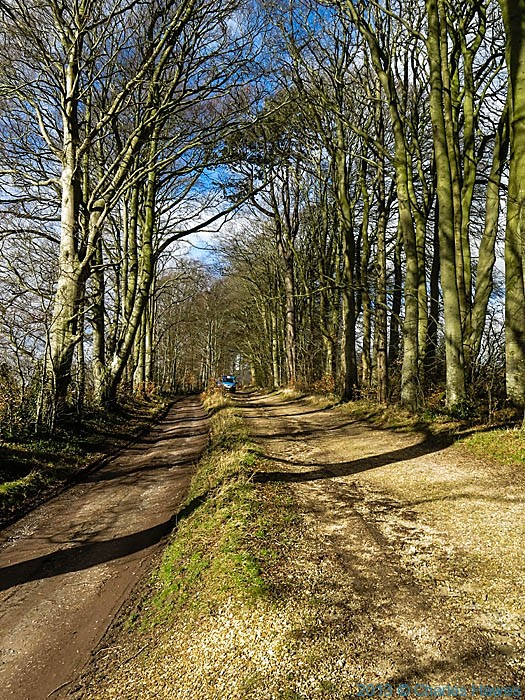 Double beech avenue leading to Grovely Woods, Wiltshire, photographed by Charles Hawes
