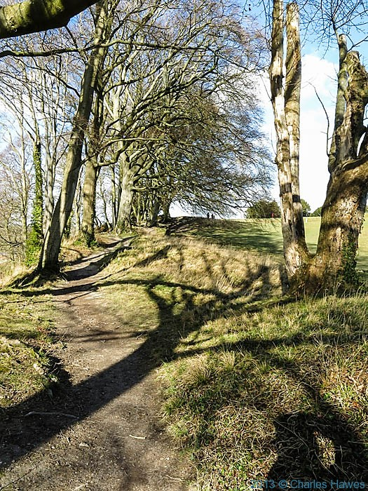 Beech trees at old sarum, photographed by Charles Hawes
