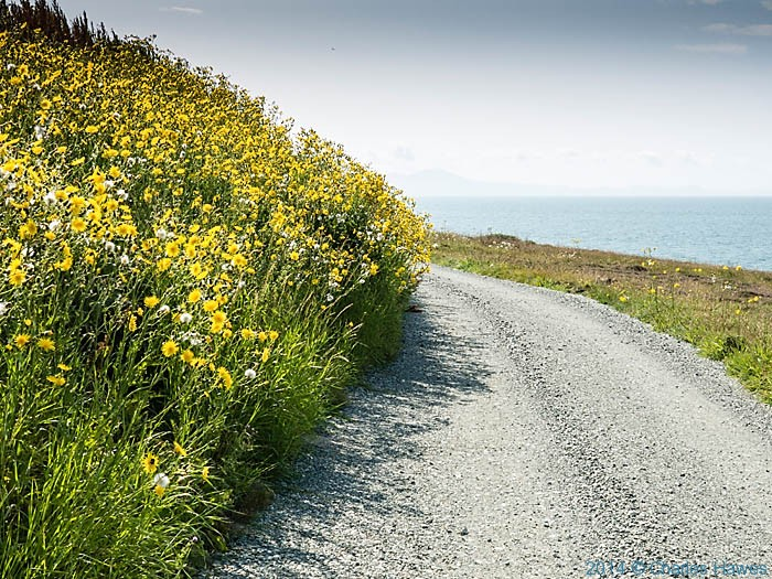 Track near the Anglesey Motor Racing Circuit photographed by Charles Hawes
