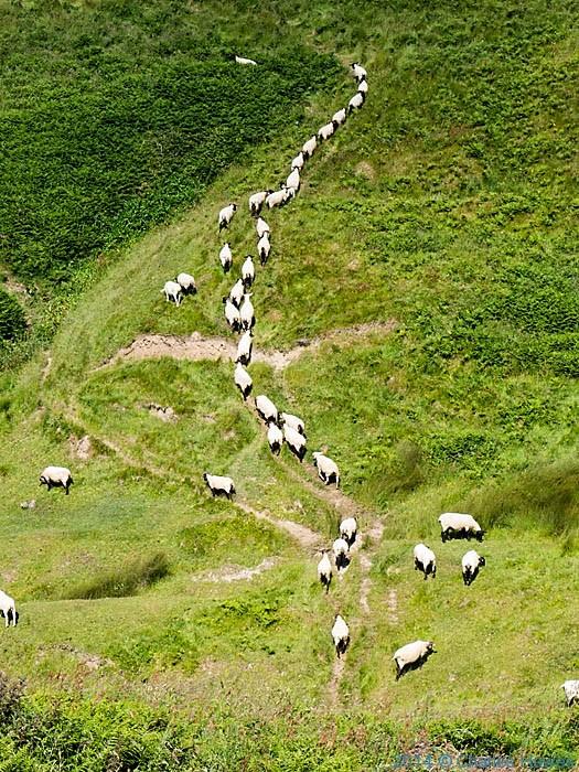 Post image for Wales Coast Path:Mynydd y Gwyddel to Porth Colmon