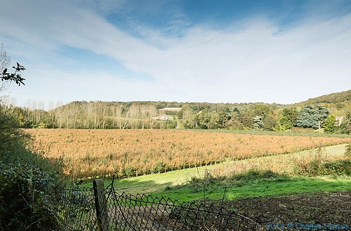 Apple Orhard near canterbury, photographed from The North Downs Way by Charles Hawes