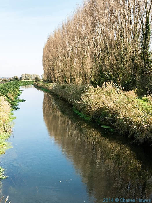 Poplars on the Little Stour near Canterbury, photographed by Charles Hawes