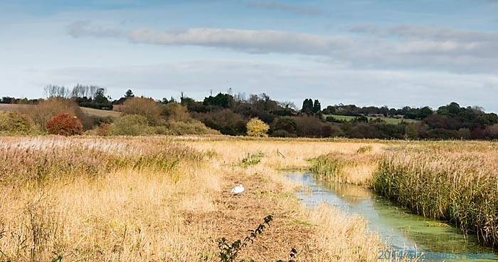 Post image for Canterbury Ways: The Stour Valley Walk to Upstreet
