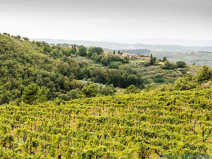 View over vineyards to Lamole , Chianti, Tuscany, photographed by Charles Hawes