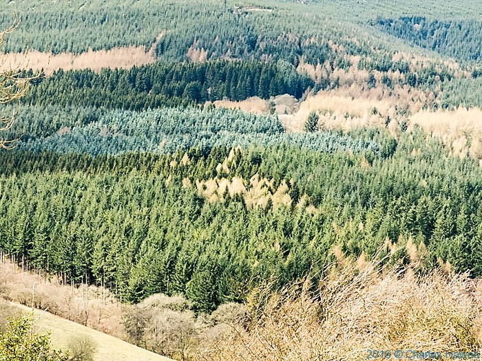 Mynydd Du Forest, photographed from The Cambrian Way by Charles Hawes