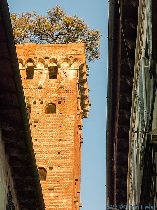 The Guinigi tower, Lucca, photographed by Charles Hawes