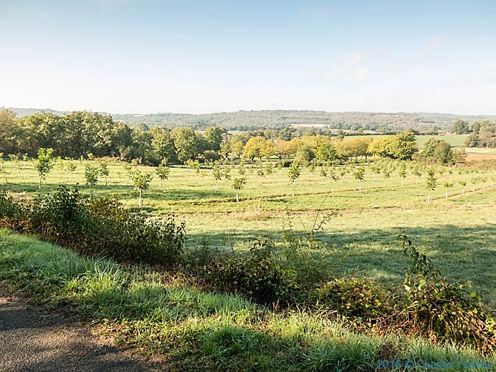 Newly planted walnut orchard near Carennac, France, photographed by Charles Hawes